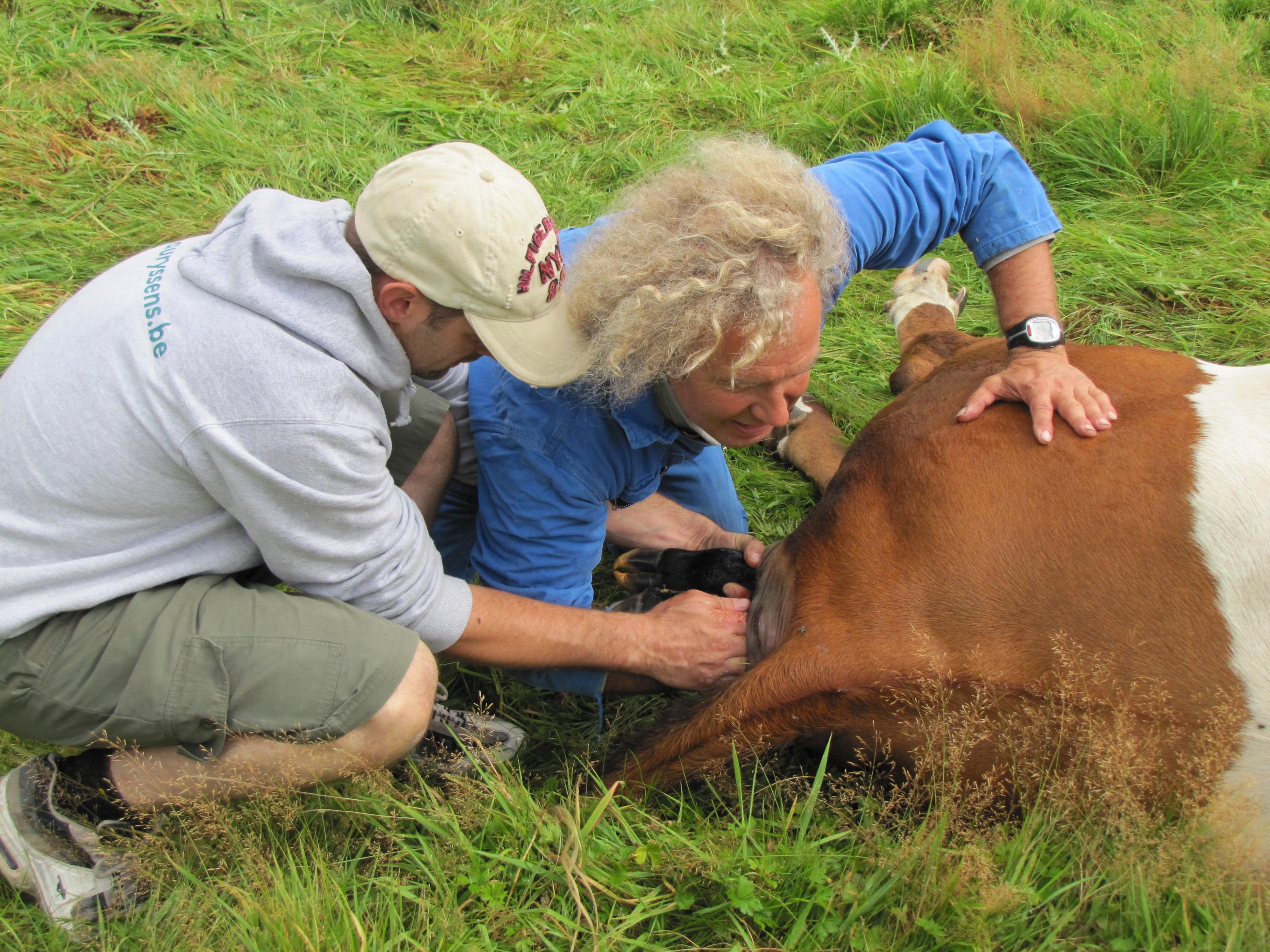 A1s er een koe moet werpen zoals vorig jaar, tijdens de koers, is het best dat de politie weet wie de bezitter is.