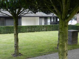 DE acht prunussen zijn al flinke bomen; in de achtergrond het aangepaste huisje